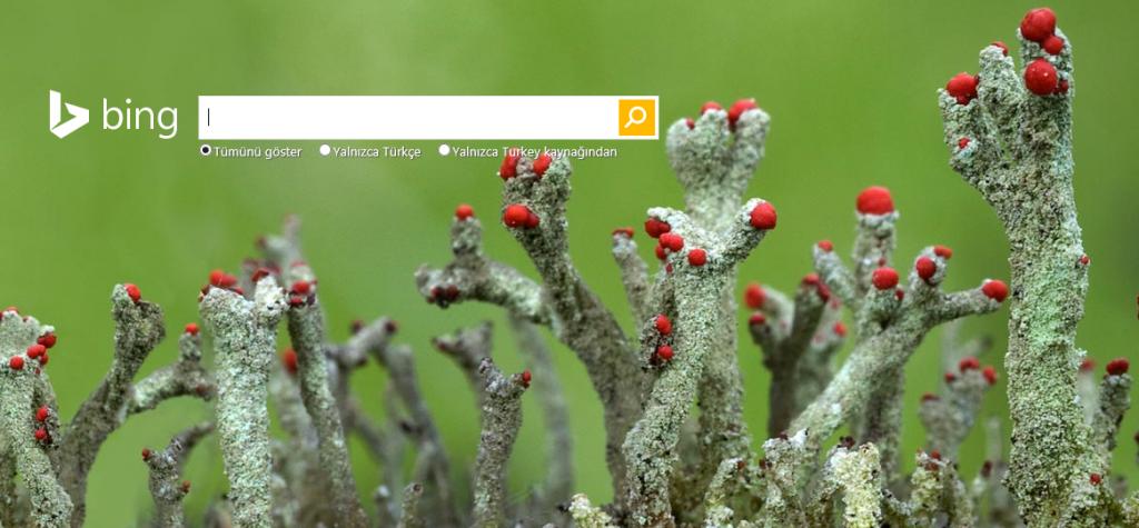 Bing ana sayfa fotoğrafı
